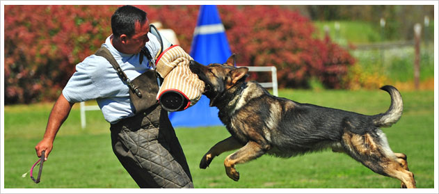 Dog personal defense